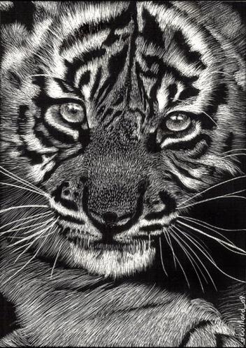 Baby Tiger by Sandra Willard