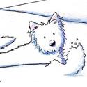 Westie Snow Plow Kim Niles