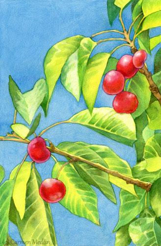 Cherry Tree by Carmen Medlin