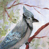 Blue Jay by Barbara Haviland