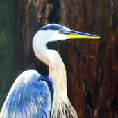 Blue Heron by Dia Spriggs