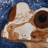 Tree Frog ACEO Set by Amanda Makepeace