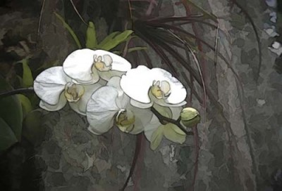 White Orchids Digital Print by Carolyn Schiffhouer available on Artfire