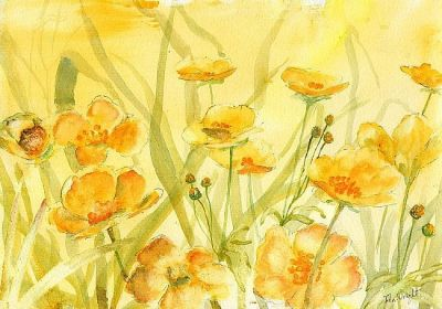 Buttercups by John Wright