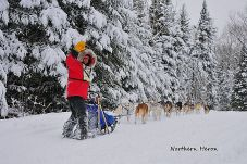 Mushing through the Evergreens by Stephanie Daigle