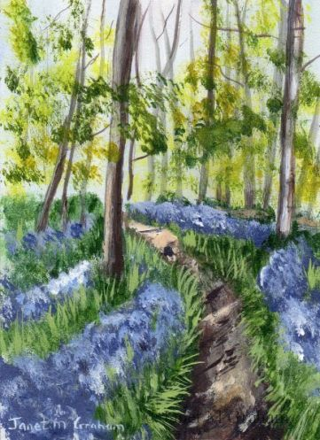 Bluebell Forest ACEO by Janet M Graham