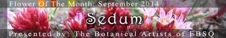 Flower of the Month: Sedum