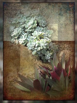 Sedum Green by Carolyn Schiffhouer