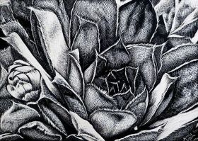 Succulent by Monique Morin Matson