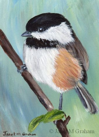 Black Capped Chickadee ACEO by Janet Graham