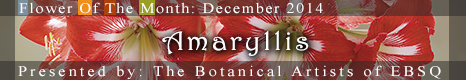 Flower of the Month: Amaryllis