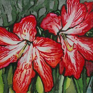 Holiday Amaryllis by Lindi Levison