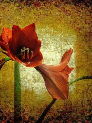 Stately Amaryllis by Carolyn Schiffhouer