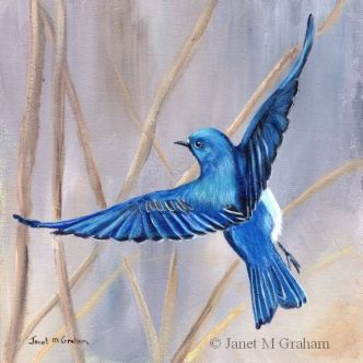 Mountain Bluebird by Janet M. Graham