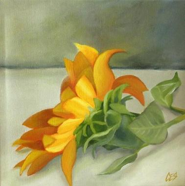 Sunflower by CES