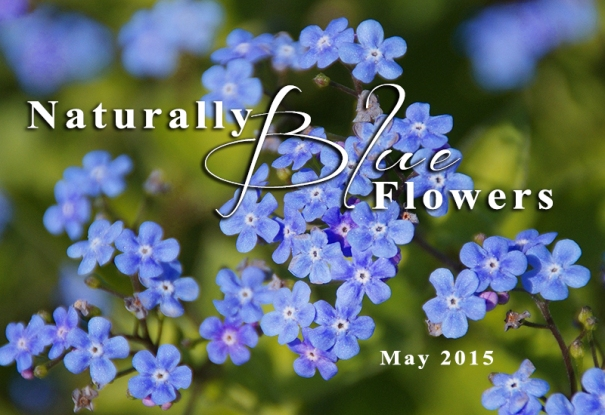 Naturally Blue Flowers - May 2015